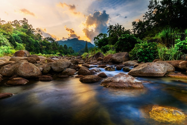 Pietra di fiume e albero con cielo e nuvola colorata, fiume di pietra e foglia di albero nella foresta Foto Premium