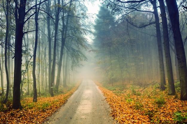 Strada e foresta nebbiosa in autunno con fogliame colorato. Foto Premium