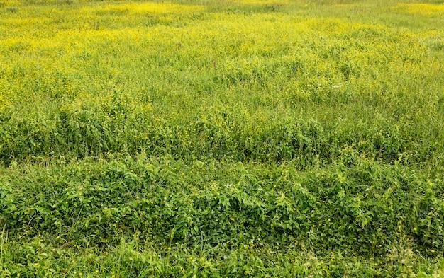 Alto angolo di paesaggio rurale Foto Premium