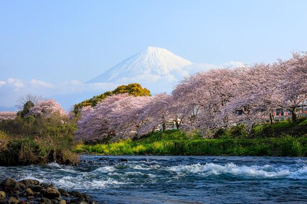 Ryuganbuchi nella città di fuji, nella prefettura di shizuoka è uno dei famosi fiori di ciliegio Foto Premium