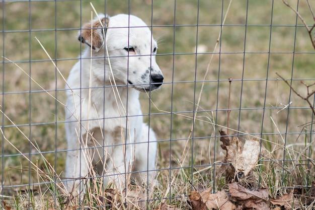 Cucciolo triste, cane solitario dietro le sbarre. cuccia, cane randagio. animale nella gabbia. rifugio per animali domestici Foto Premium