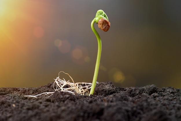 Il germoglio e la pianta che crescono germogliano il passo sopra la parete verde. giovani germogli alla luce del sole Foto Premium