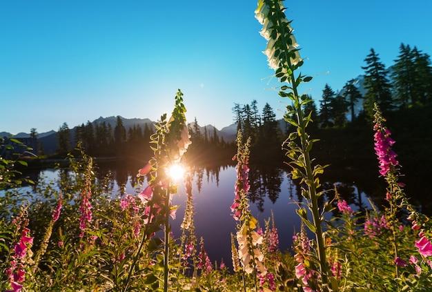 Lago di serenità in montagna nella stagione estiva. Foto Premium