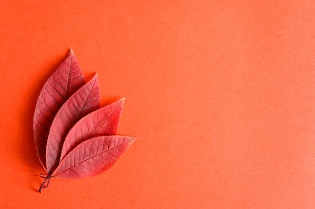 Diverse foglie di ciliegio autunno rosso caduto su uno sfondo di carta rossa laici piatta Foto Premium