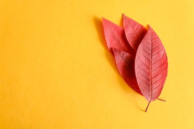 Diverse foglie di ciliegio autunno rosso caduto su uno sfondo di carta gialla laici piatta Foto Premium