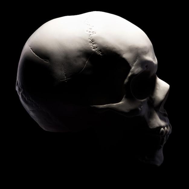 Vista laterale del modello in gesso del cranio umano isolato su sfondo nero con tracciato di ritaglio. concetto di terrore, apprendimento fisiologico e disegno. Foto Premium