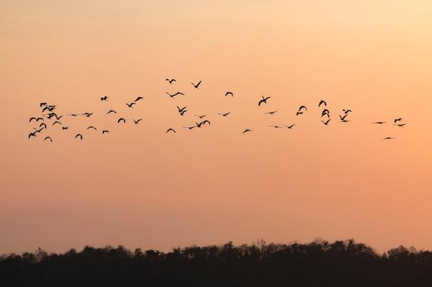 Le siluette degli uccelli che volano con il cielo del tramonto vanno a casa Foto Premium