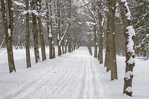 Pista da sci sulla neve lungo la corsia degli alberi nel parco in inverno. Foto Premium