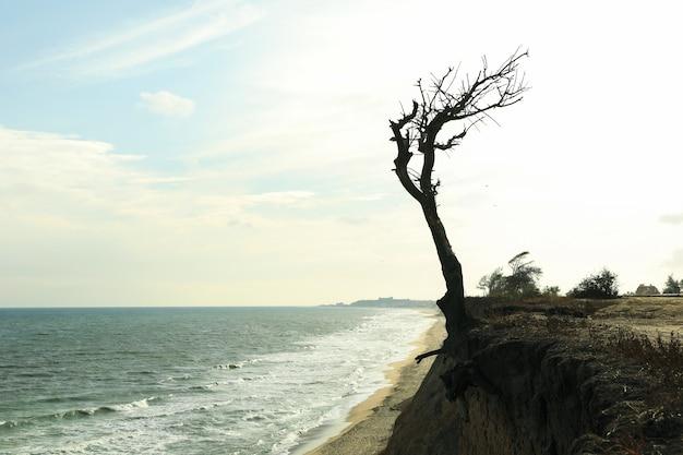 Pendio con albero solitario sulla spiaggia del mare Foto Premium