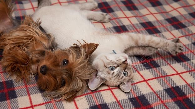 Un cagnolino e un gattino giacciono a casa, guardando l'obiettivo Foto Premium