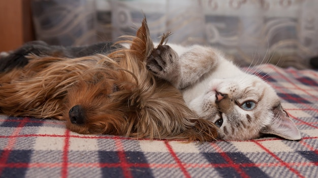 Un cagnolino e un gattino dormono a casa Foto Premium
