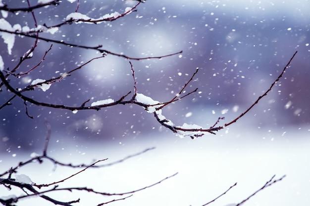 Ramo di albero innevato nella foresta di inverno Foto Premium