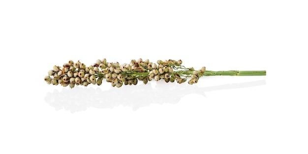 Fiore di sorgo sul tavolo bianco Foto Premium
