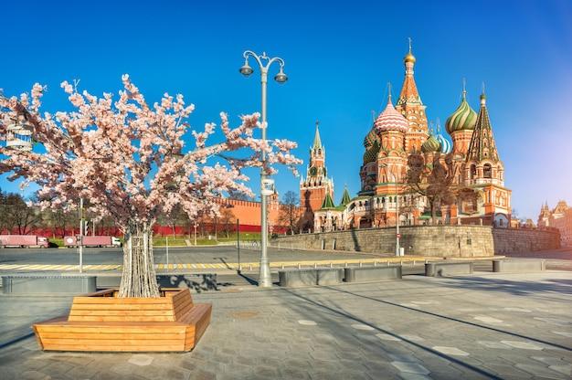 Albero di fioritura primaverile vicino alla piazza rossa di mosca e alla cattedrale di san basilio Foto Premium