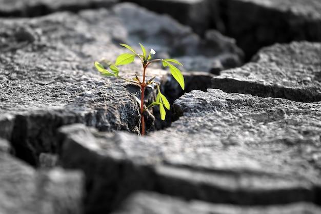 Spuntano piante che crescono su terra screpolata molto secca Foto Premium