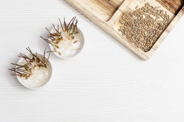 Grano dei germogli su fondo di legno con lo spazio della copia. cibo sano e vegetariano. germinazione di semi di grano a casa. Foto Premium