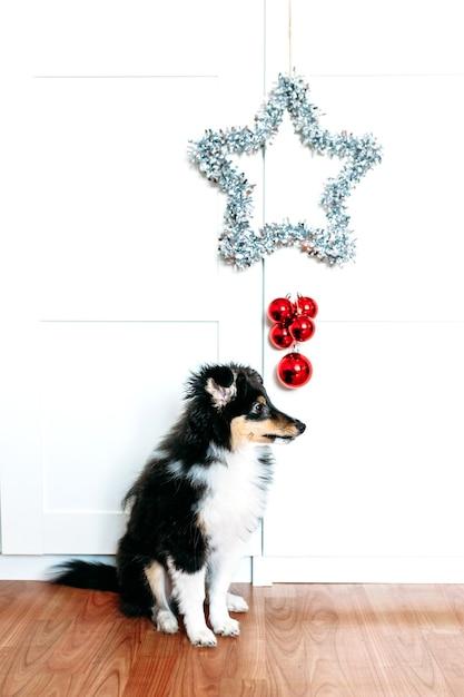 Stella e palline rosse decorazioni per la casa il tifo per capodanno e natale, sfondo, lucido, cucciolo di cane seduto Foto Premium