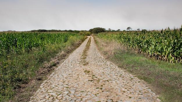 Strada lastricata in pietra nei campi di grano Foto Premium
