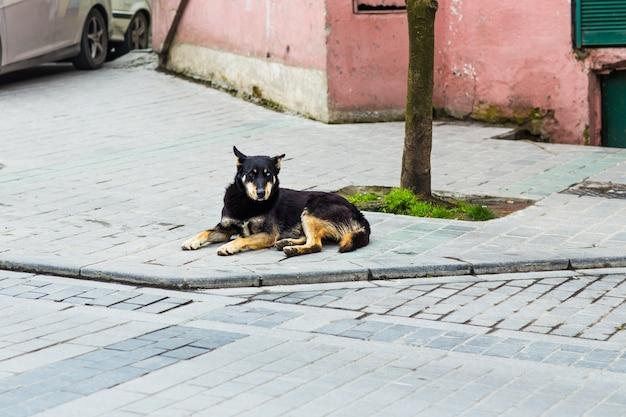 Cane di strada sdraiato Foto Premium