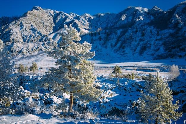 Viste mozzafiato sulla catena montuosa racconto natalizio nelle alpi Foto Premium