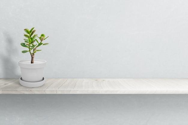 Pianta succulenta sul vaso isolato sull'ornamento bianco del vaso Foto Premium