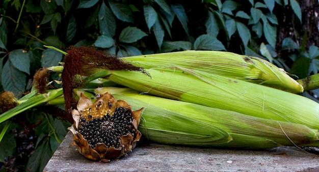 Autunno del giardino del cereale del girasole Foto Premium
