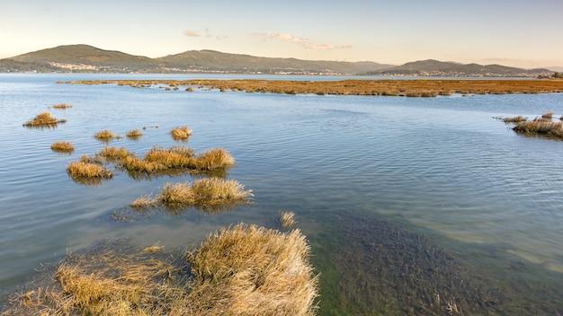 Le paludi, le zone umide erbose coprono una parte della costa Foto Premium