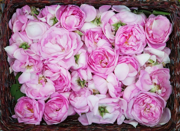 Petali di rosa del tè nel cestino Foto Premium