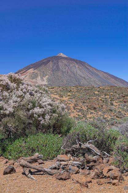 Teide vulcanic national park landscape, con spartocytisus supranubius fioritura, tenerife, isole canarie, spagna Foto Premium