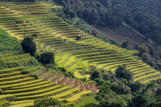 Risaia a terrazze paesaggio del campo di mu cang chai, yenbai, vietnam del nord Foto Premium
