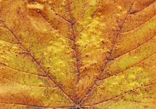 Foglia di autunno del fondo di struttura texture fogliame caduta Foto Premium