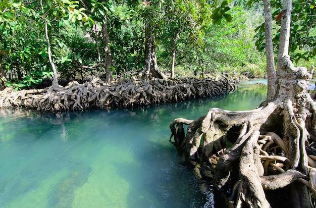 Tha pom klong song nam a krabi a krabi, tailandia Foto Premium