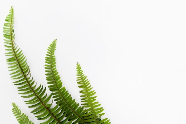 Vista dall'alto di foglie di felce con copia spazio Foto Premium