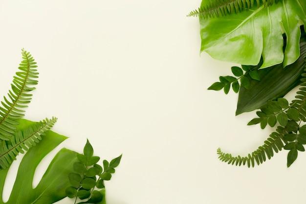 Vista dall'alto di felci con foglie di monstera e altre foglie Foto Premium