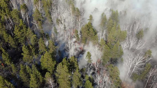 Vista dall'alto di un incendio scoppiato nella foresta Foto Premium