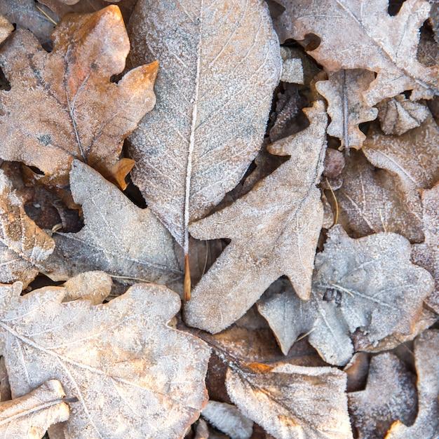Vista dall'alto di foglie gialle secche congelate - sfondo naturale. mattina d'inverno. Foto Premium