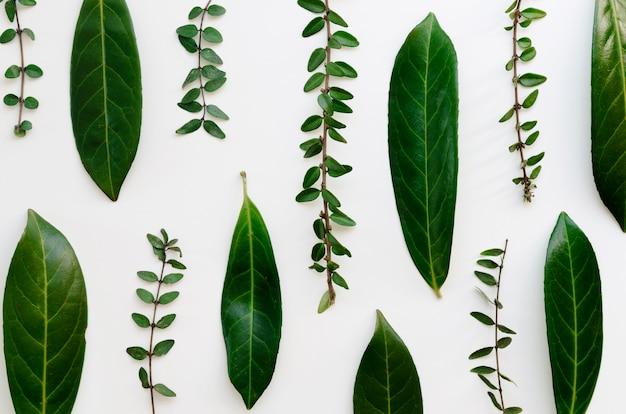 Vista dall'alto del concetto di foglie verdi Foto Premium
