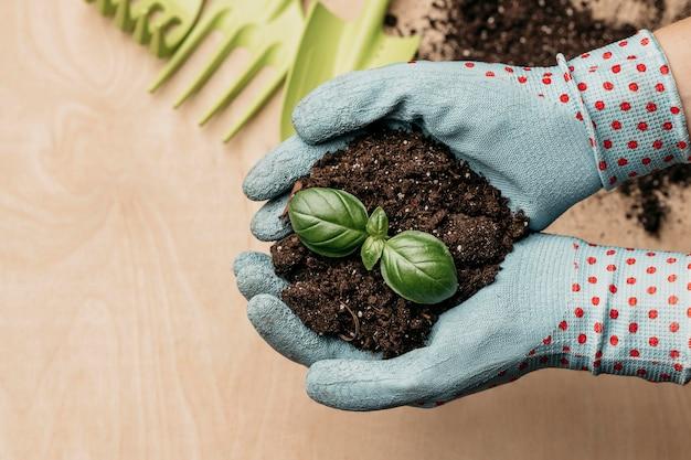 Vista dall'alto delle mani con guanti che tengono terreno e pianta Foto Premium