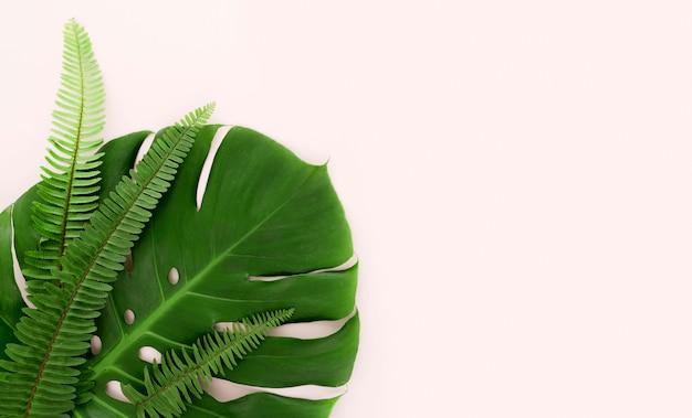 Vista dall'alto di foglie di monstera e felci con copia spazio Foto Premium