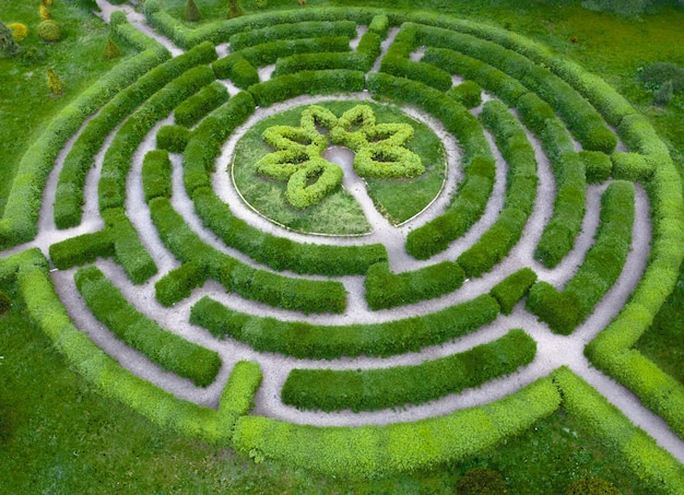 Topiaria da giardino a forma di labirinto, nel giardino botanico grishka a kiev. Foto Premium