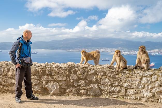 Tourista provoca le scimmie sulla strada nella riserva naturale Foto Premium