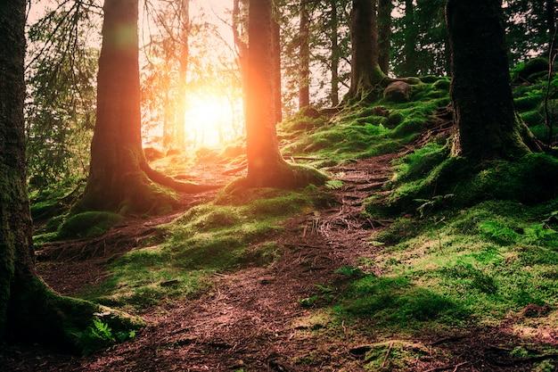 Radici e sole dell'albero in una foresta verde Foto Premium
