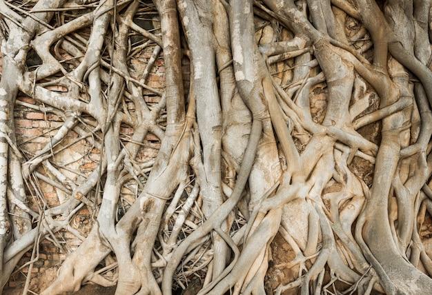 Tronco d'albero sul muro di mattoni Foto Premium
