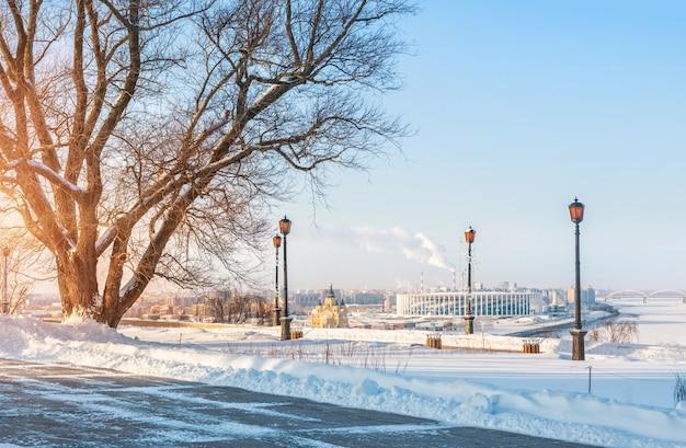 Albero e vista del gatto alexander nevsky Foto Premium