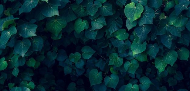 Fiore variopinto delle foglie tropicali sulla natura verde scuro del fogliame del fondo tropicale scuro della natura del fogliame Foto Premium