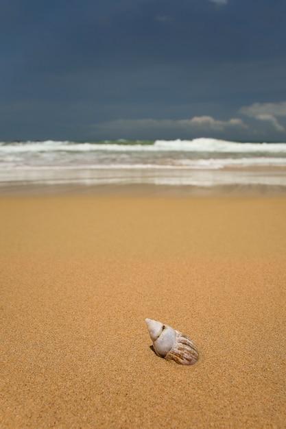Spiaggia di sabbia tropicale Foto Premium