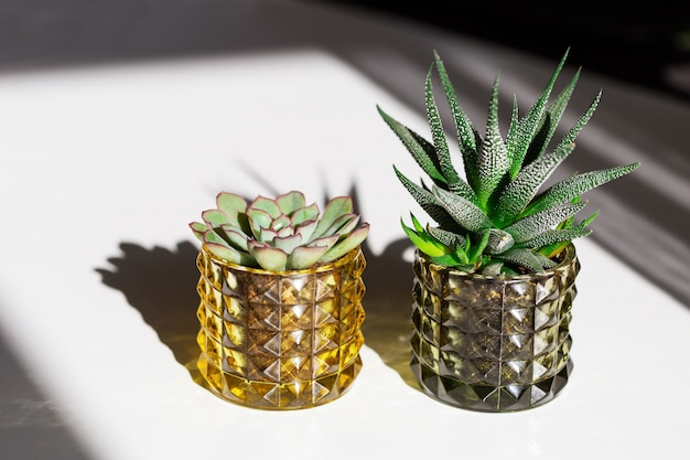 Due piante grasse verdi in vasi di vetro Foto Premium