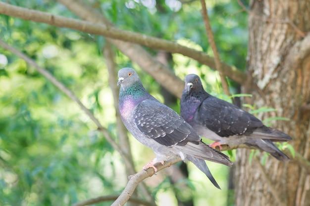 Due piccioni sono seduti su un ramo di un albero Foto Premium