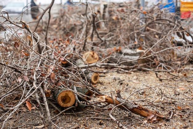 Il servizio di emergenza urbano rimuove un albero caduto su una strada con un traktor di attrezzature speciali. Foto Premium