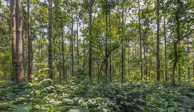 Varietà di alberi lungo la strada nella provincia di mae hong son, thailandia Foto Premium